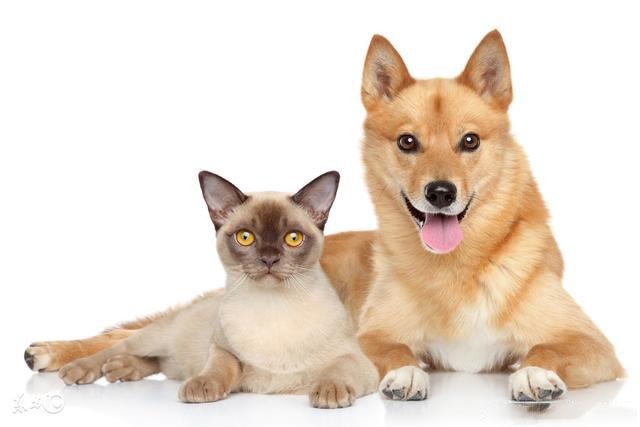 影响宠物生长发育